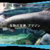 【淡水魚世界最大級!】世界淡水魚園水族館 アクア・トト ぎふについて